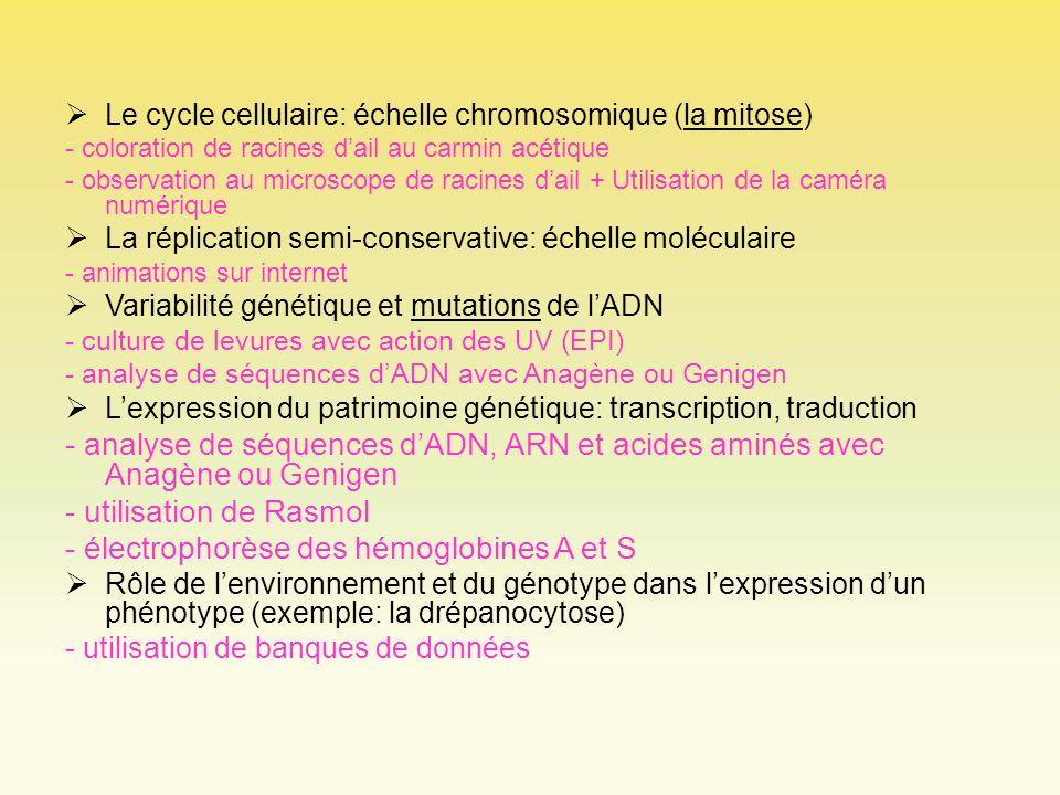 Le cycle cellulaire: échelle chromosomique (la mitose) - coloration de racines dail au carmin acétique - observation au microscope de racines dail + U