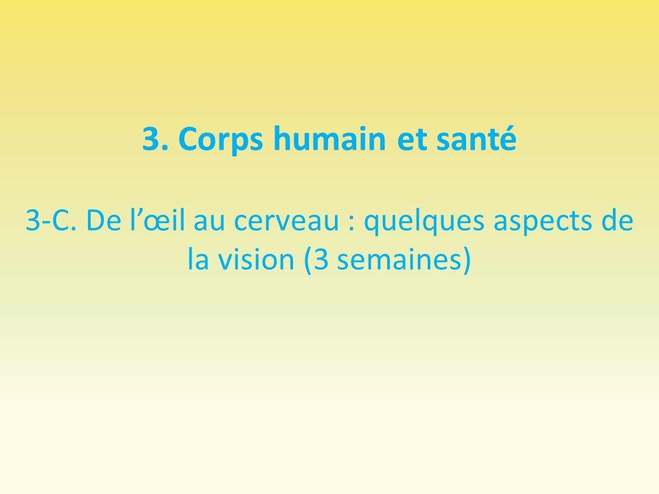 3. Corps humain et santé 3-C. De lœil au cerveau : quelques aspects de la vision (3 semaines)