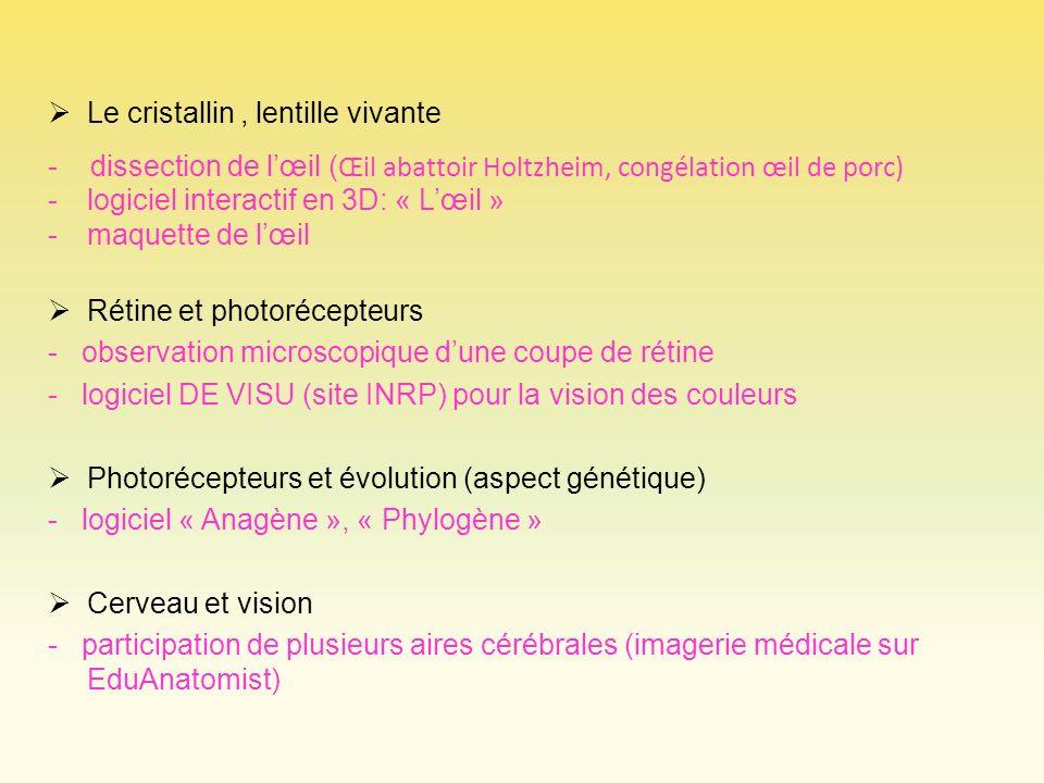 Le cristallin, lentille vivante - dissection de lœil ( Œil abattoir Holtzheim, congélation œil de porc) -logiciel interactif en 3D: « Lœil » -maquette