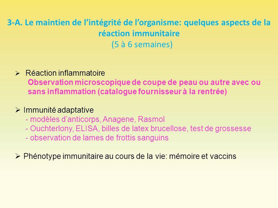 3-A. Le maintien de lintégrité de lorganisme: quelques aspects de la réaction immunitaire (5 à 6 semaines) Réaction inflammatoire Observation microsco