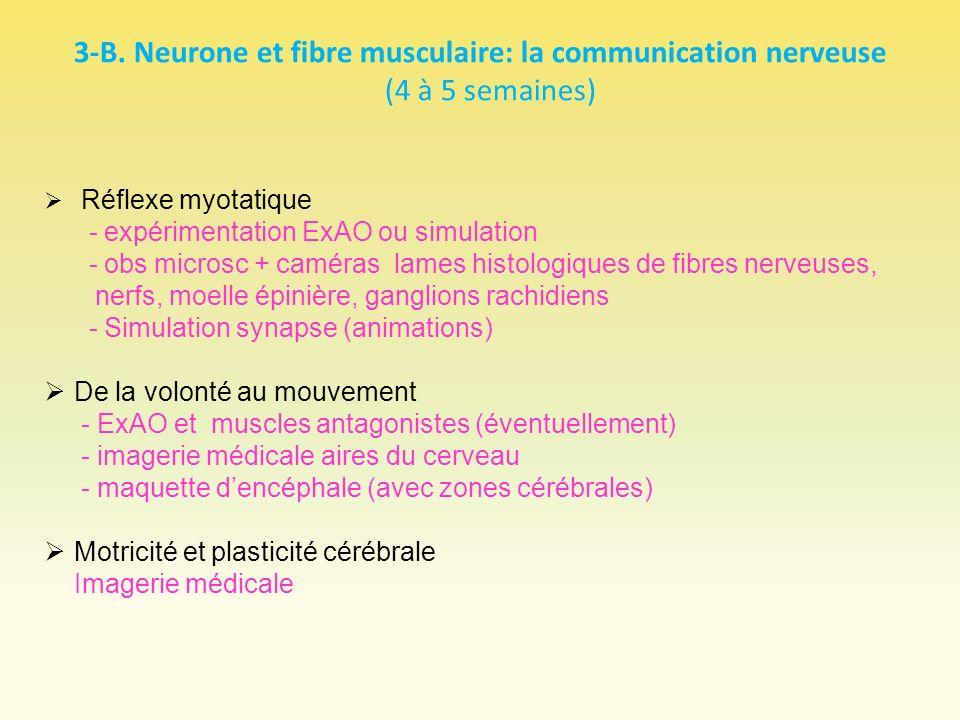 3-B. Neurone et fibre musculaire: la communication nerveuse (4 à 5 semaines) Réflexe myotatique - expérimentation ExAO ou simulation - obs microsc + c