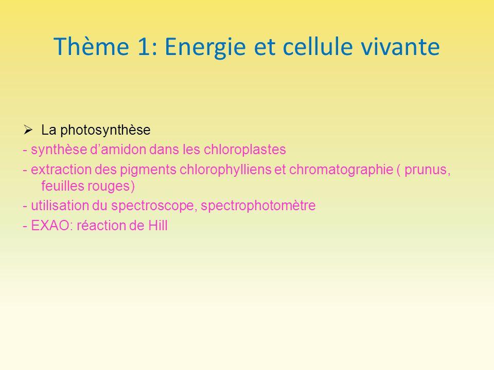 Thème 1: Energie et cellule vivante La photosynthèse - synthèse damidon dans les chloroplastes - extraction des pigments chlorophylliens et chromatogr