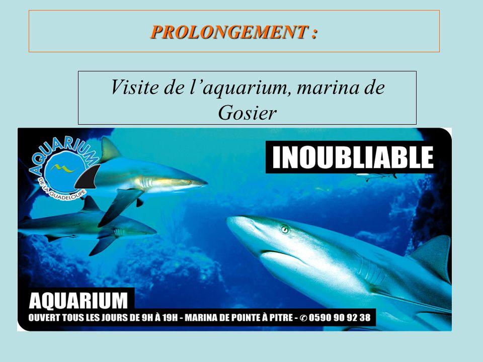 PROLONGEMENT : Visite de laquarium, marina de Gosier