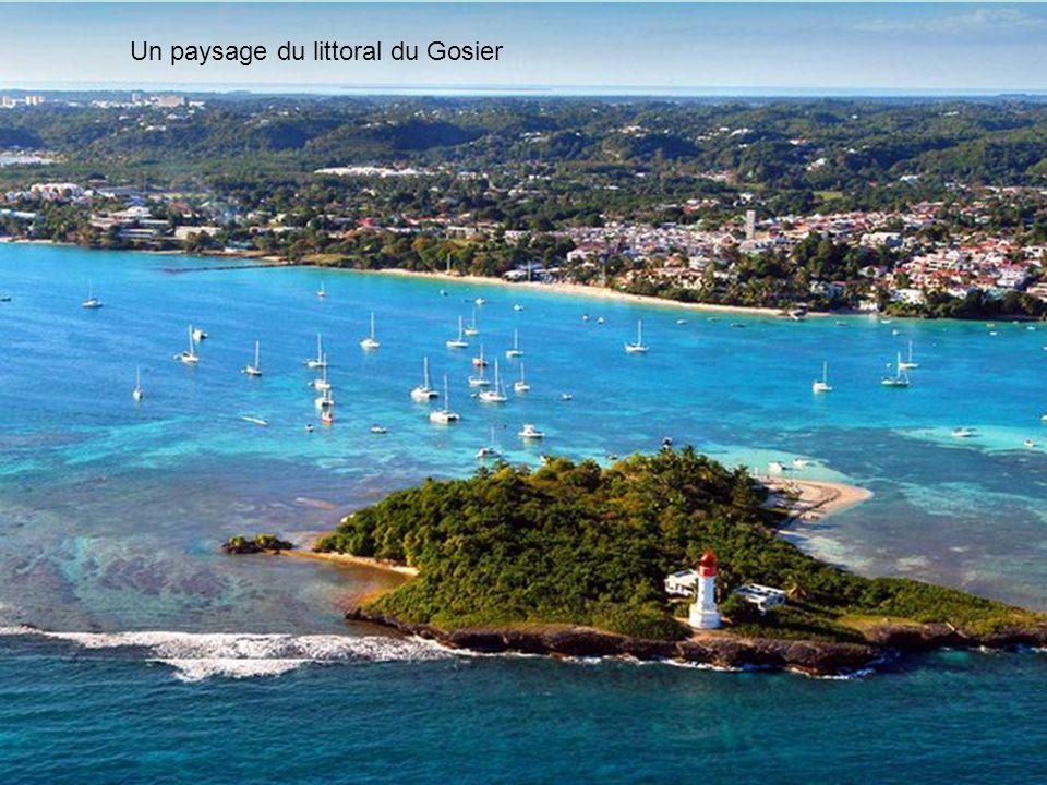 Document 1 : LE PROJET «GRAND BAIE » Grand Baie semble être un projet de complexe touristique qui arrivera à voir le jour en Guadeloupe.