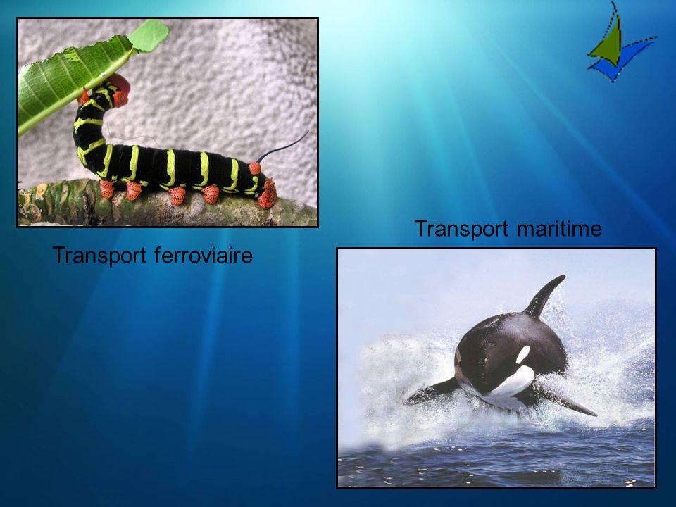 Transport ferroviaire Transport maritime
