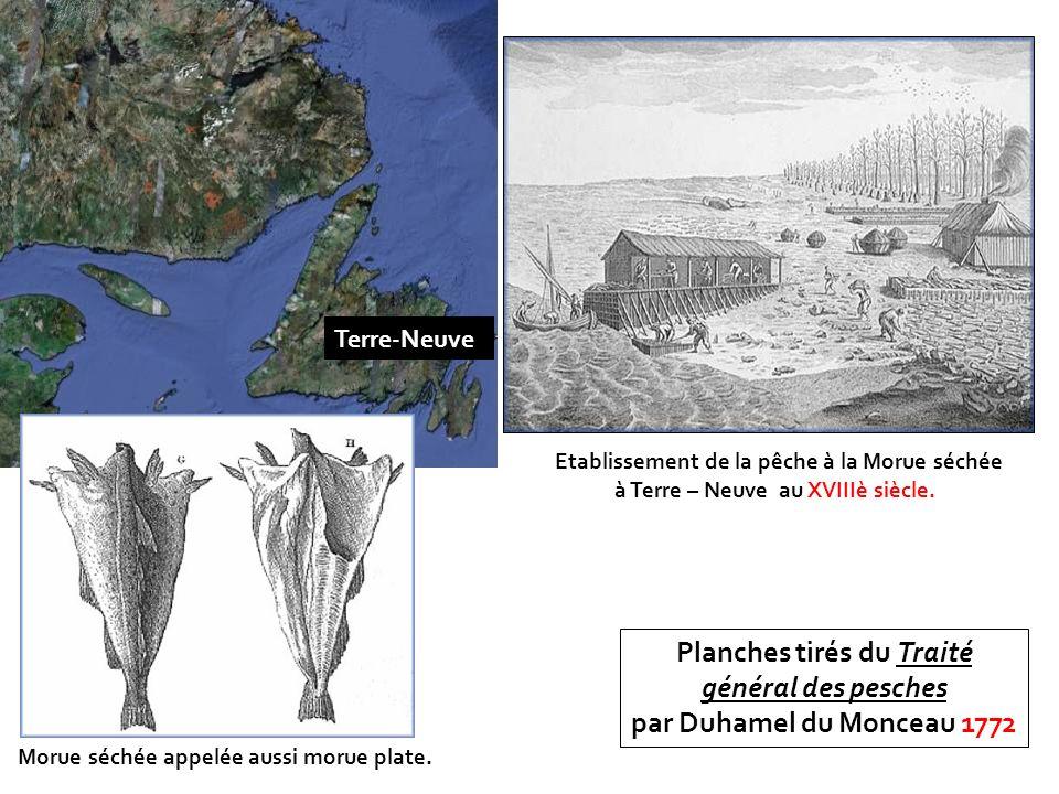 Morue séchée appelée aussi morue plate. Etablissement de la pêche à la Morue séchée à Terre – Neuve au XVIIIè siècle. Planches tirés du Traité général