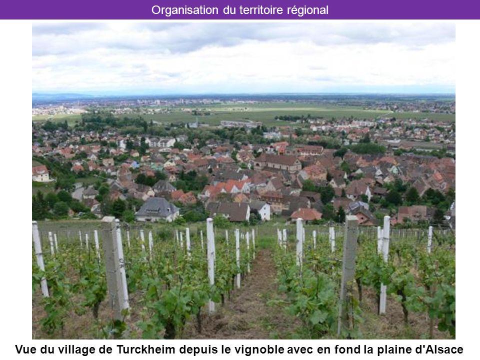 Vue du village de Turckheim depuis le vignoble avec en fond la plaine d'Alsace Organisation du territoire régional