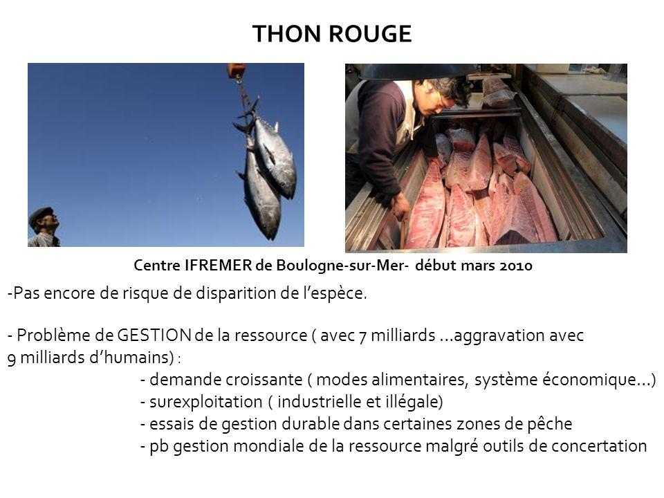 THON ROUGE Centre IFREMER de Boulogne-sur-Mer- début mars 2010 -Pas encore de risque de disparition de lespèce. - Problème de GESTION de la ressource