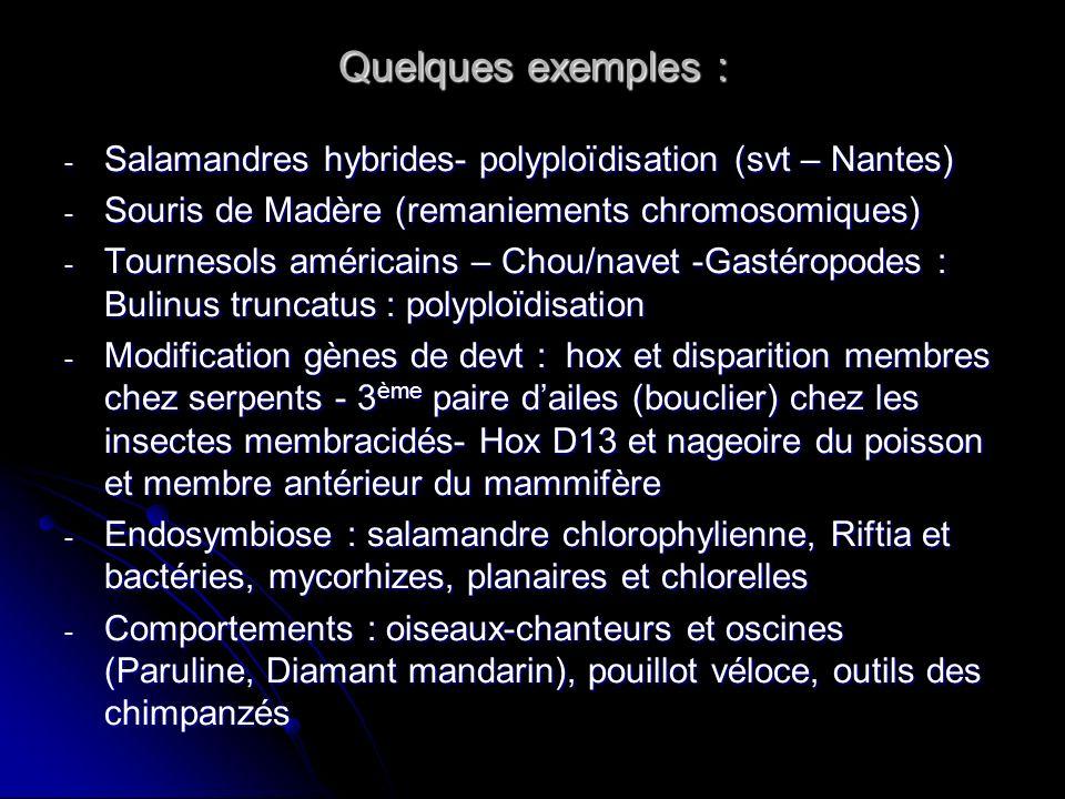 Quelques exemples : - Salamandres hybrides- polyploïdisation (svt – Nantes) - Souris de Madère (remaniements chromosomiques) - Tournesols américains –