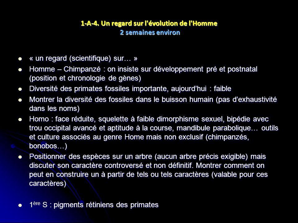 1-A-4. Un regard sur l'évolution de l'Homme 2 semaines environ « un regard (scientifique) sur… » « un regard (scientifique) sur… » Homme – Chimpanzé :