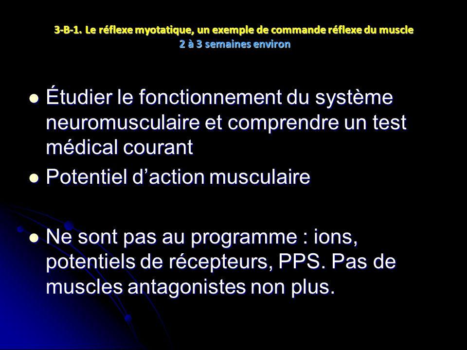 3-B-1. Le réflexe myotatique, un exemple de commande réflexe du muscle 2 à 3 semaines environ Étudier le fonctionnement du système neuromusculaire et