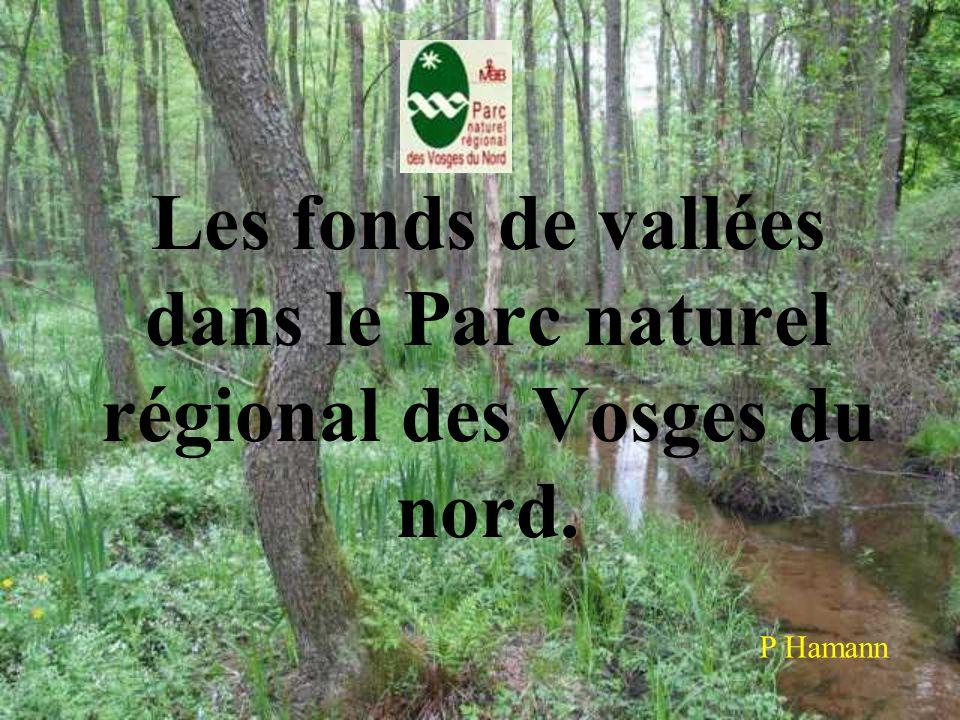 Les fonds de vallées dans le Parc naturel régional des Vosges du nord. P Hamann