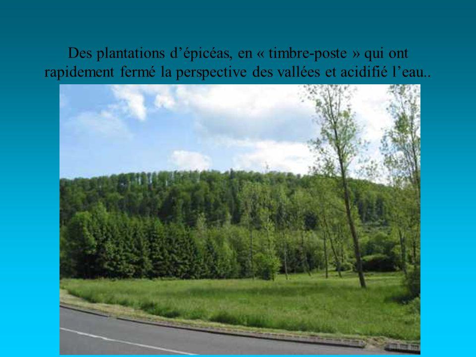 Des plantations dépicéas, en « timbre-poste » qui ont rapidement fermé la perspective des vallées et acidifié leau..
