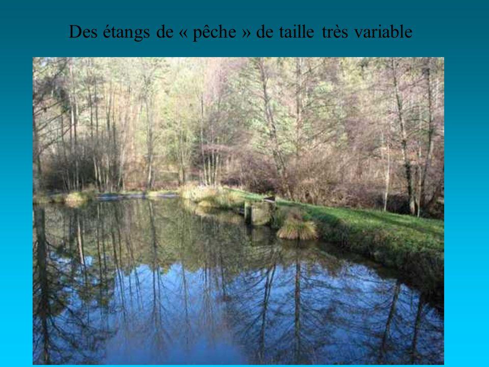 Des étangs de « pêche » de taille très variable
