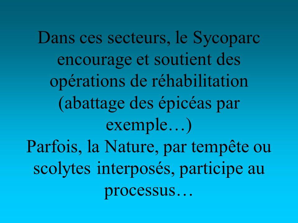 Dans ces secteurs, le Sycoparc encourage et soutient des opérations de réhabilitation (abattage des épicéas par exemple…) Parfois, la Nature, par tempête ou scolytes interposés, participe au processus…