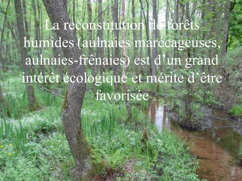 La reconstitution de forêts humides (aulnaies marécageuses, aulnaies-frênaies) est dun grand intérêt écologique et mérite dêtre favorisée