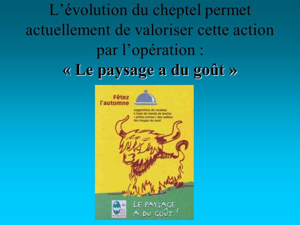 « Le paysage a du goût » Lévolution du cheptel permet actuellement de valoriser cette action par lopération : « Le paysage a du goût »