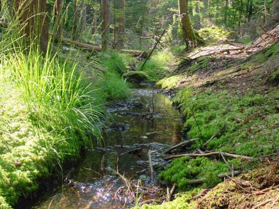Histoire des fonds de vallée : Les fonds de vallées boisés ont été défrichés au moyen âge ( tout comme la plaine dAlsace!) pour permettre leur exploitation par les populations qui se sont installées :