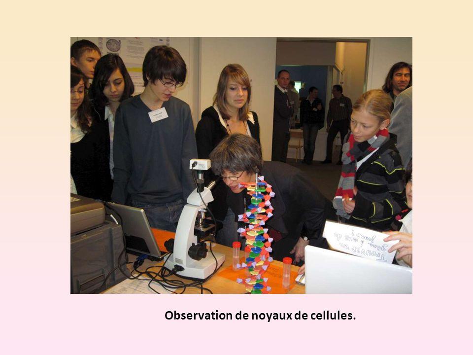 Observation de noyaux de cellules.
