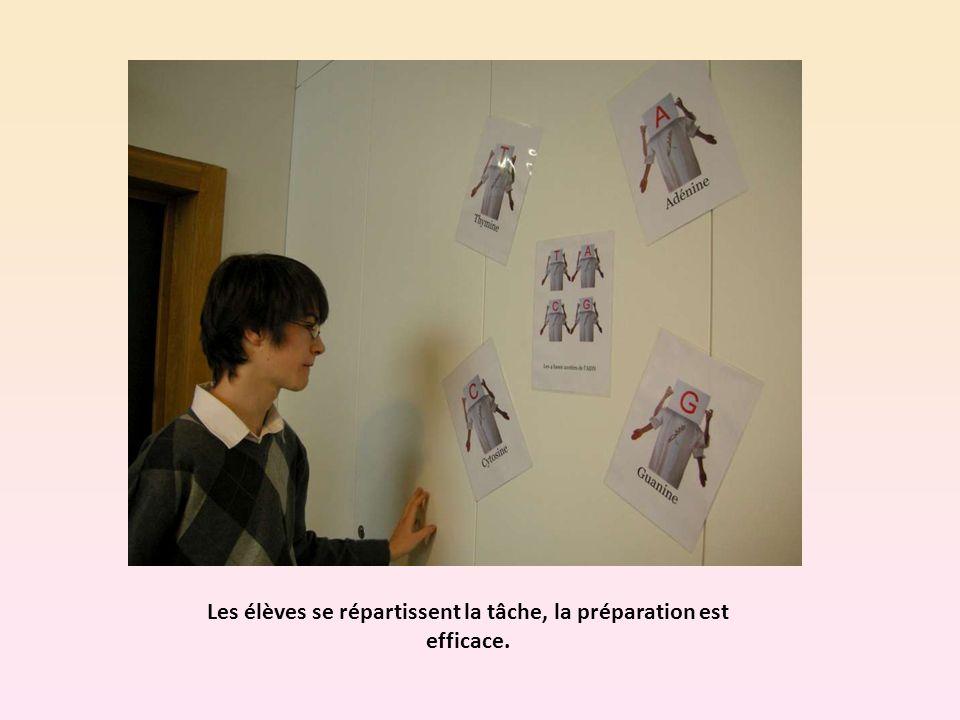 Les élèves se répartissent la tâche, la préparation est efficace.
