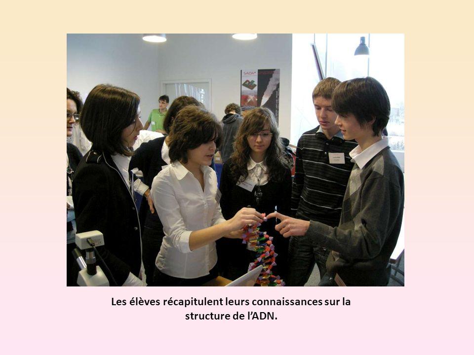 Les élèves récapitulent leurs connaissances sur la structure de lADN.