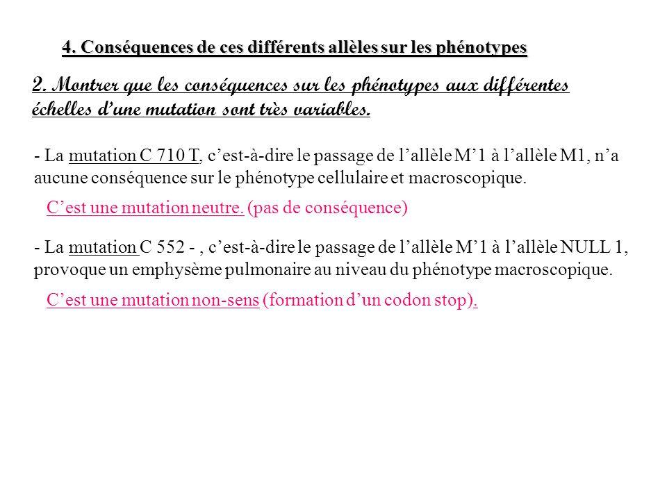 4. Conséquences de ces différents allèles sur les phénotypes 2. Montrer que les conséquences sur les phénotypes aux différentes échelles dune mutation