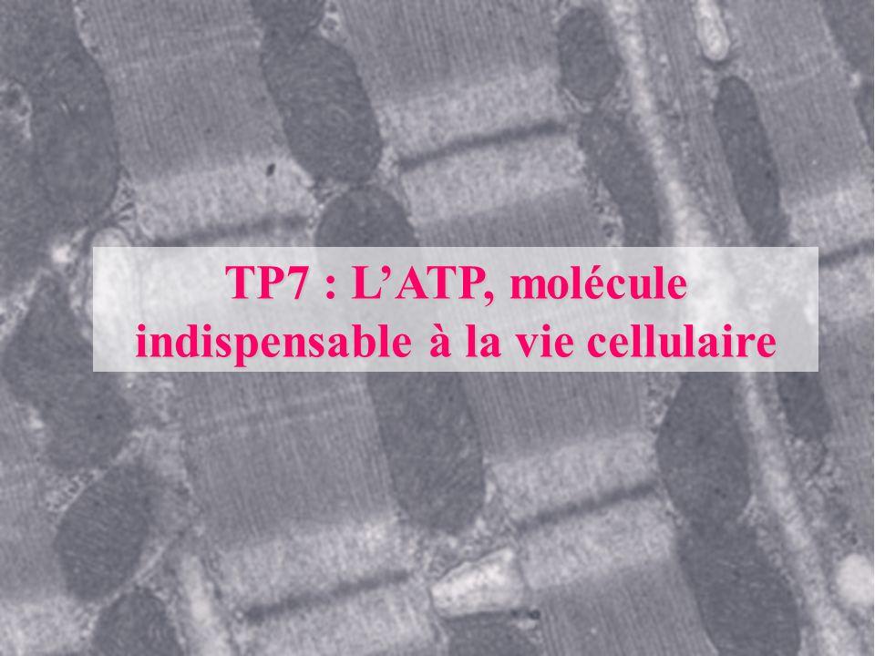 TP7 : LATP, molécule indispensable à la vie cellulaire