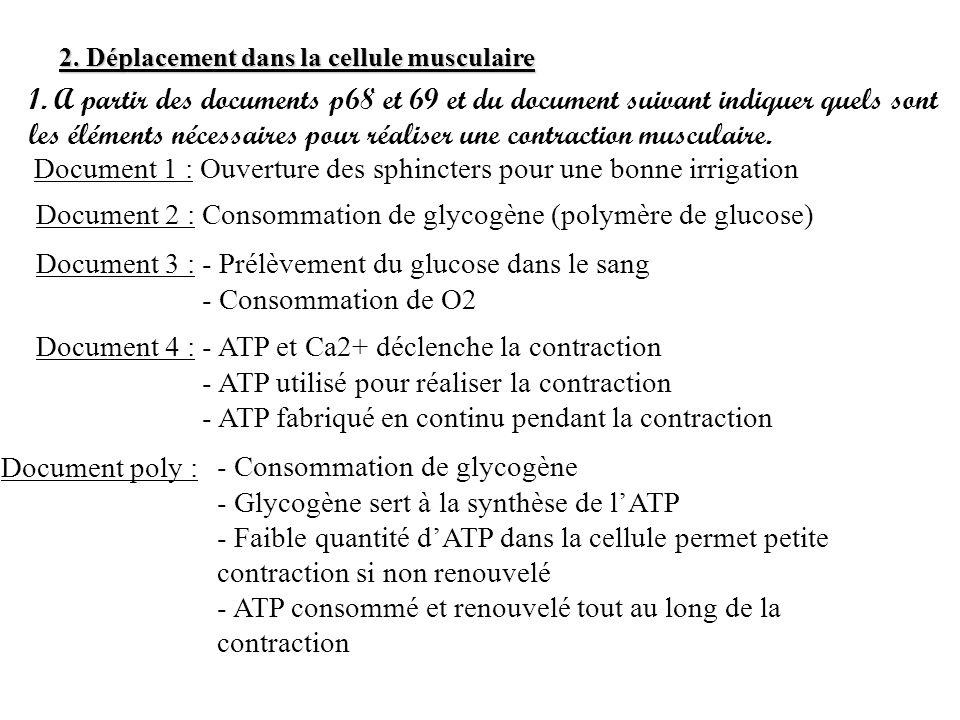 2. Déplacement dans la cellule musculaire 1. A partir des documents p68 et 69 et du document suivant indiquer quels sont les éléments nécessaires pour