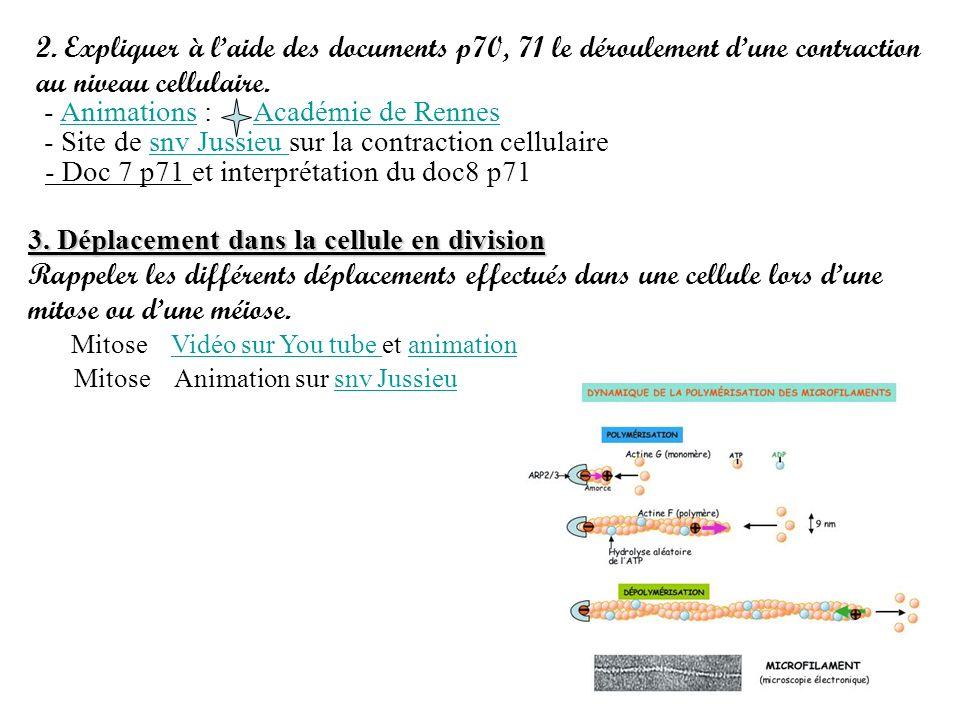 2. Expliquer à laide des documents p70, 71 le déroulement dune contraction au niveau cellulaire. - Animations :Animations - Site de snv Jussieu sur la