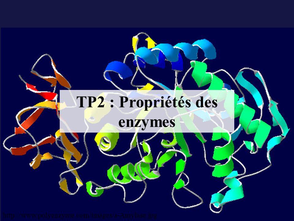 Une enzyme est une protéine qui : - Accélère une réaction chimique (cest un catalyseur) - Est spécifique (action et substrat) - Reste intacte en fin de réaction