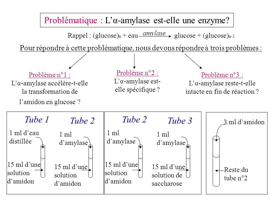 Problématique : Lα-amylase est-elle une enzyme.