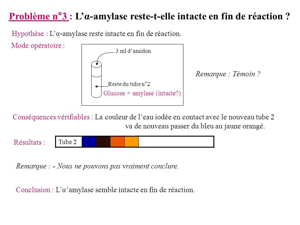 Problème n°3 : Lα-amylase reste-t-elle intacte en fin de réaction .