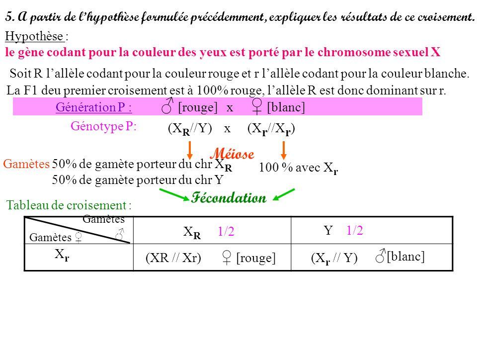 5. A partir de lhypothèse formulée précédemment, expliquer les résultats de ce croisement. Hypothèse : le gène codant pour la couleur des yeux est por