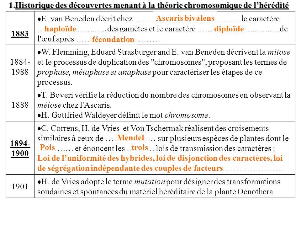1.Historique des découvertes menant à la théorie chromosomique de lhérédité 1883 E. van Beneden décrit chez ………………………………. le caractère ……………………….des g