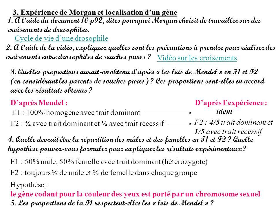 3. Expérience de Morgan et localisation dun gène 1. A laide du document 10 p92, dites pourquoi Morgan choisit de travailler sur des croisements de dro