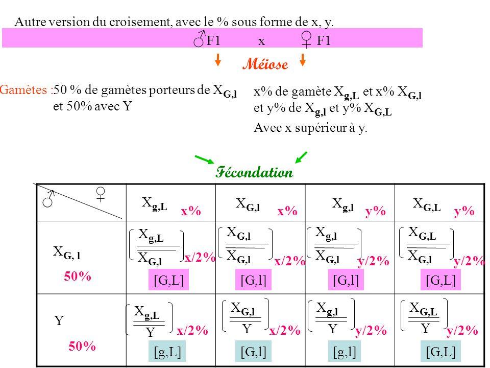x/2 + y/2 = [G,L] x/2 + y/2 = [G,l] x/2 = [g,L] x/2 = [G,l] y/2 = [g,l] y/2 = [G,L] Résultats théoriques Résultats expérimentaux 25 20 5 Les résultats expérimentaux étant similaires, notre hypothèse est validée : les 2 gènes sont liés et portés par le chromosome X.