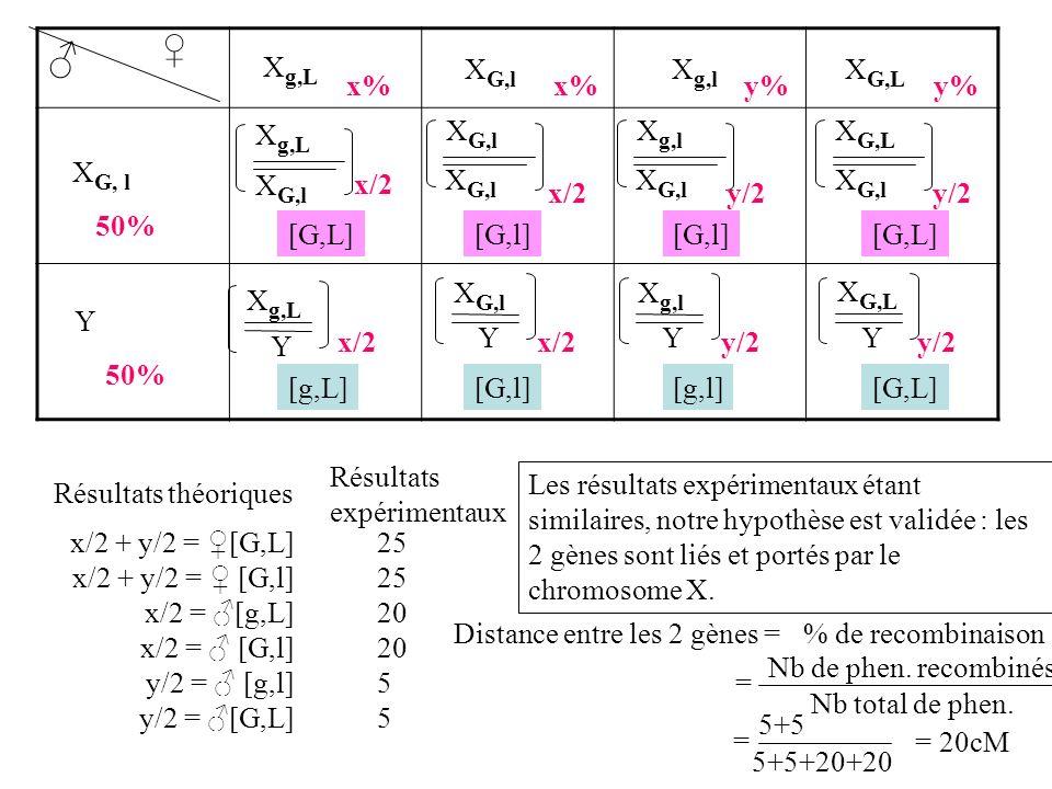 x/2 + y/2 = [G,L] x/2 + y/2 = [G,l] x/2 = [g,L] x/2 = [G,l] y/2 = [g,l] y/2 = [G,L] Résultats théoriques Résultats expérimentaux 25 20 5 Les résultats