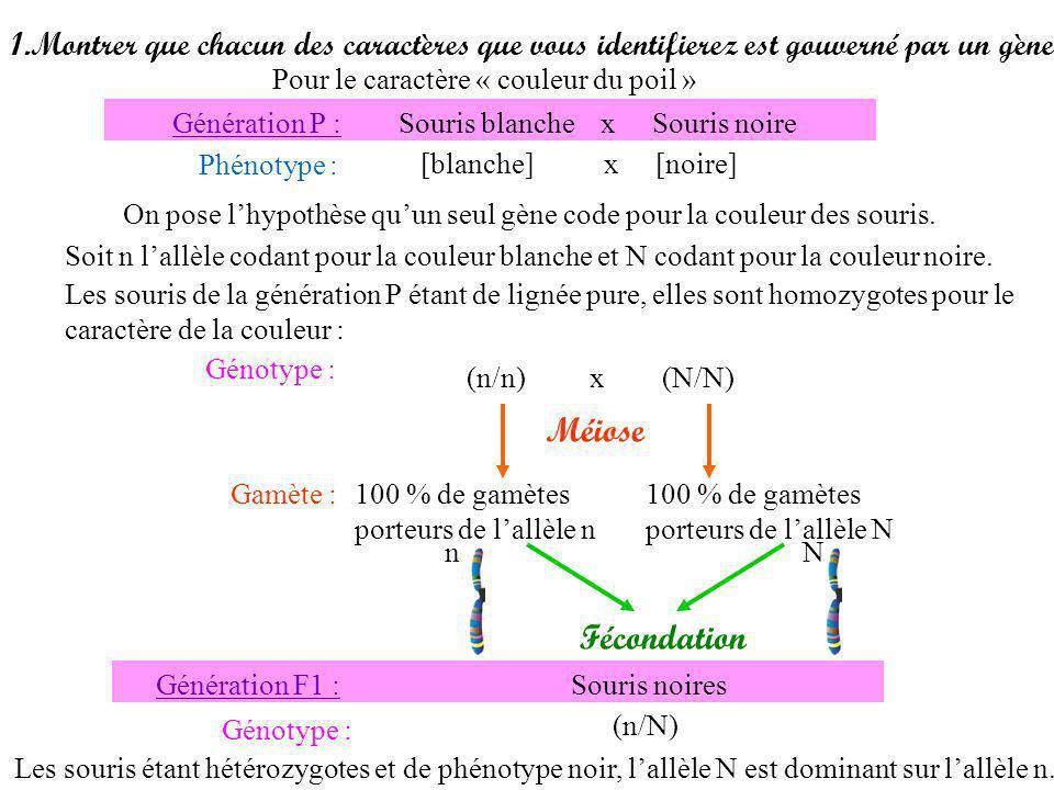Gamète : 50 % de gamètes porteurs de lallèle n et 50% de gamètes porteurs de lallèle N Souris F1 x Souris blanche Phénotype : [noire] x [blanche] On connaît le génotype de la souris F1 : Génotype :(n / N) x (n / n) Méiose 100 % de gamètes porteurs de lallèle n (n/N) Lallèle n étant récessif devant lallèle N, la souris blanche est donc homozygote :(n/n) nNnNnnnn nn NNnn nn