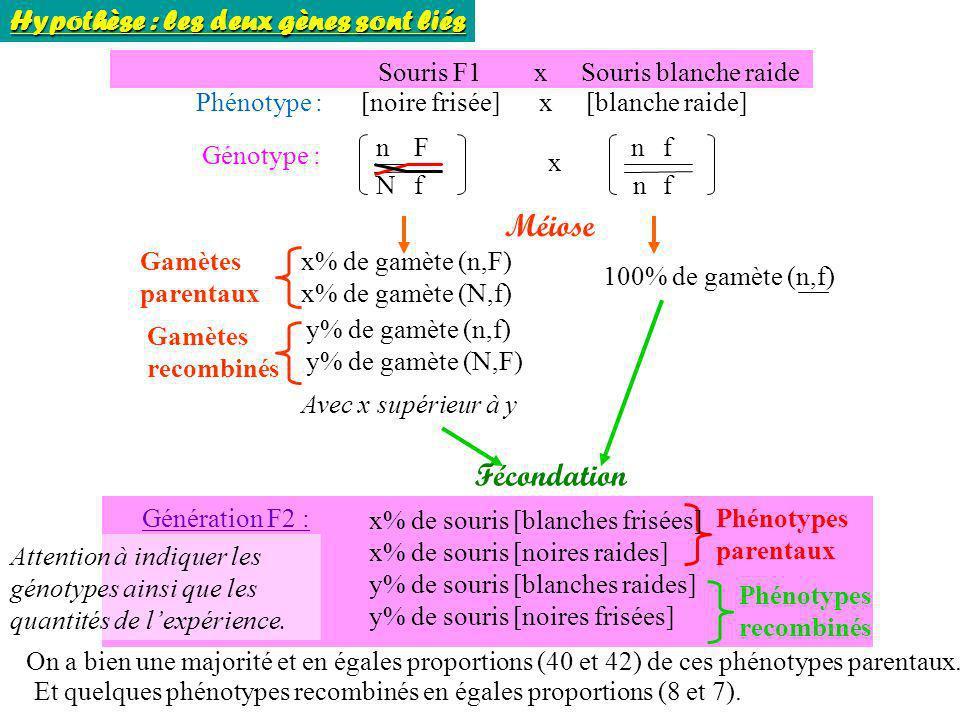 Souris F1 x Souris blanche raide Phénotype : [noire frisée] x [blanche raide] Génotype : n N F f n n f f x Méiose x% de gamète (n,F) x% de gamète (N,f
