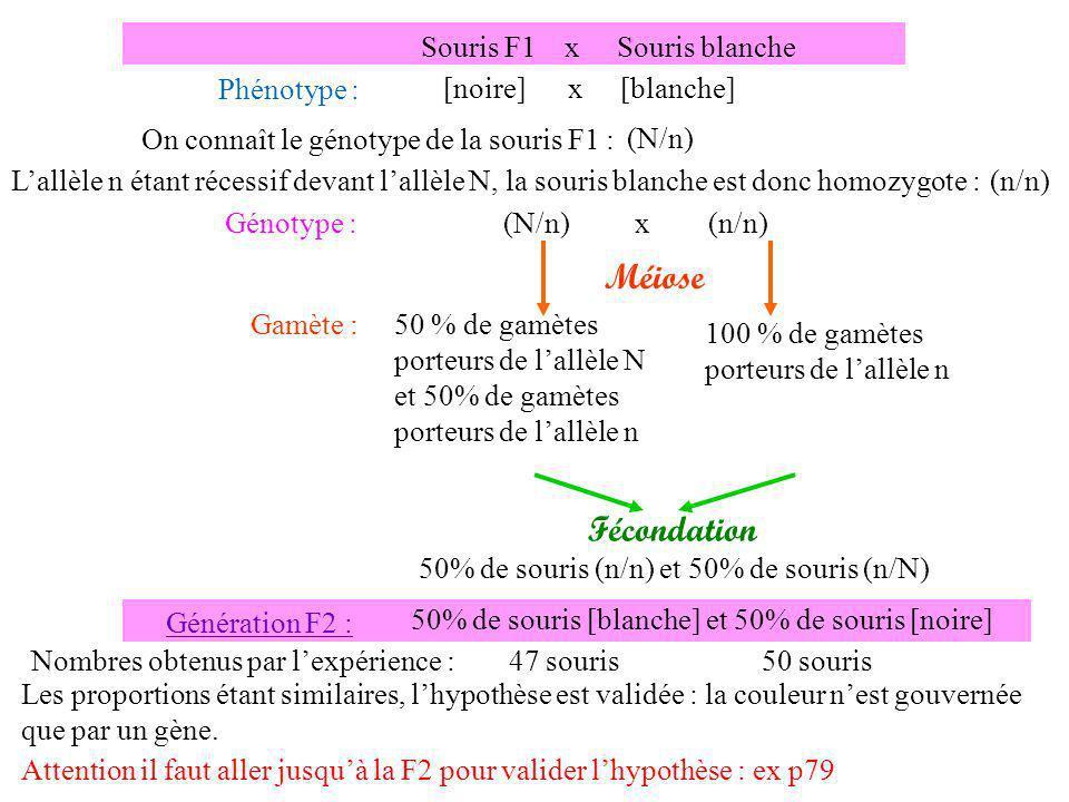 Génotype : N N f f Génération P : Souris noire raide x Souris blanche frisée Phénotype : [noire, raide] x [blanche, frisée] n n F F x Gamète : 100 % de gamètes (n,F) nnnn F FFF Méiose n F NNNN ffff N f 100 % de gamètes (N,f) Hypothèse : les deux gènes sont liés