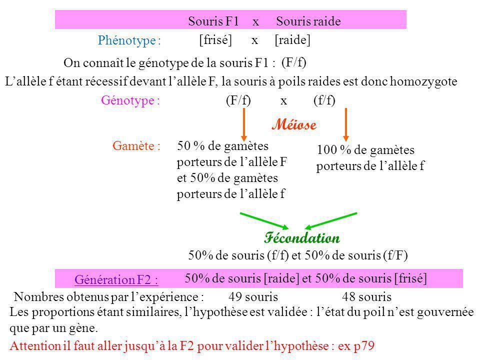 Gamète : 100 % de gamètes porteurs de lallèle n et de lallèle F Génération P : Souris blanche frisée x Souris noire raide Phénotype : [blanche, frisée] x [noire, raide] Génotype : nnnn FFFF Méiose n F n n F F ; N N f f ; x NNNN ffff 100 % de gamètes porteurs de lallèle N et de lallèle f N f Hypothèse : les deux gènes sont indépendants