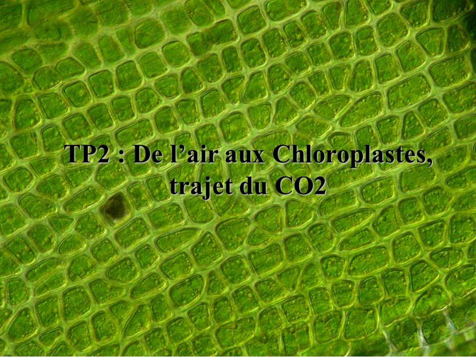 TP2 : De lair aux Chloroplastes, trajet du CO2