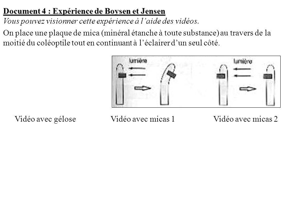 Document 4 : Expérience de Boysen et Jensen Vous pouvez visionner cette expérience à laide des vidéos. On place une plaque de mica (minéral étanche à