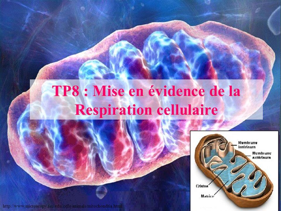 TP8 : Mise en évidence de la Respiration cellulaire http://www.microscopy.fsu.edu/cells/animals/mitochondria.html