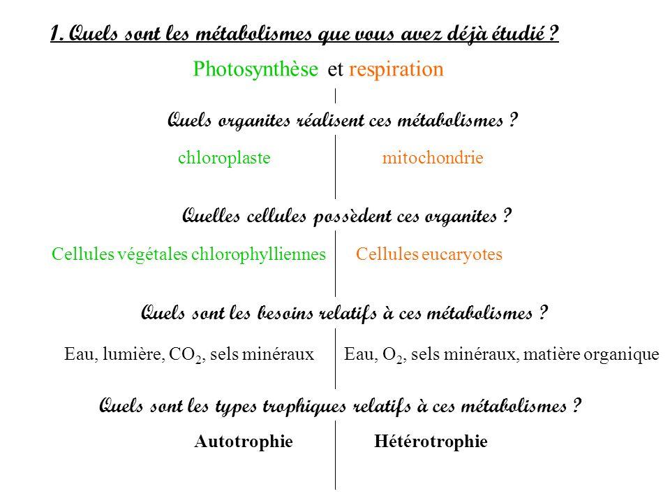 1. Quels sont les métabolismes que vous avez déjà étudié ? Photosynthèse et respiration Quels organites réalisent ces métabolismes ? chloroplaste mito