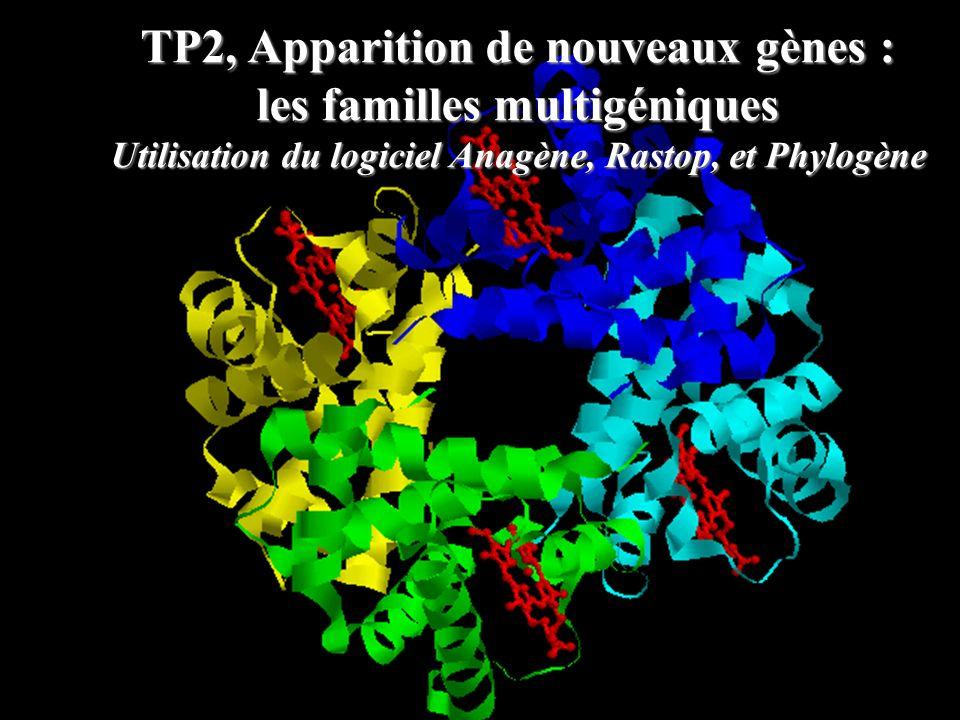 TP2, Apparition de nouveaux gènes : les familles multigéniques Utilisation du logiciel Anagène, Rastop, et Phylogène
