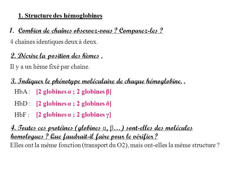 1. Structure des hémoglobines 1.Combien de chaînes observez-vous ? Comparez-les ? 4 chaînes identiques deux à deux. 2. Décrire la position des hèmes.