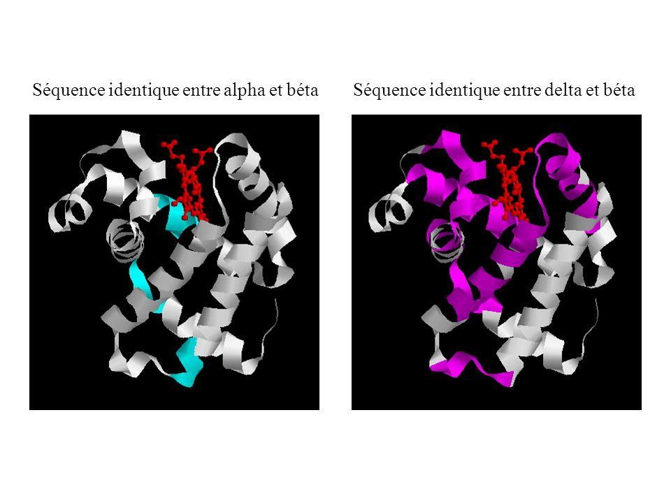 Séquence identique entre alpha et bétaSéquence identique entre delta et béta