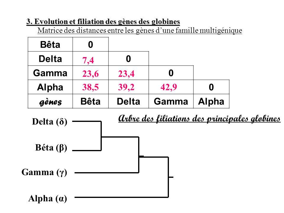 Bêta0 Delta0 Gamma0 Alpha0 gènes BêtaDeltaGammaAlpha 3. Evolution et filiation des gènes des globines 38,5 Matrice des distances entre les gènes dune