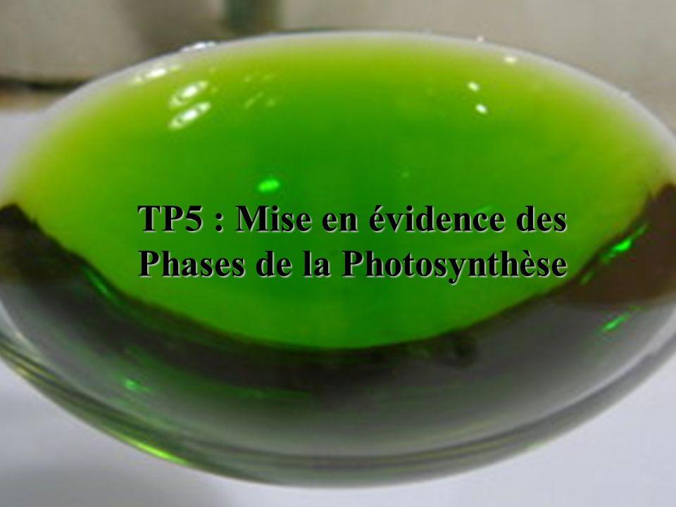 1.Equation de la photosynthèse 1) Rappeler léquation de la photosynthèse, et sa localisation.